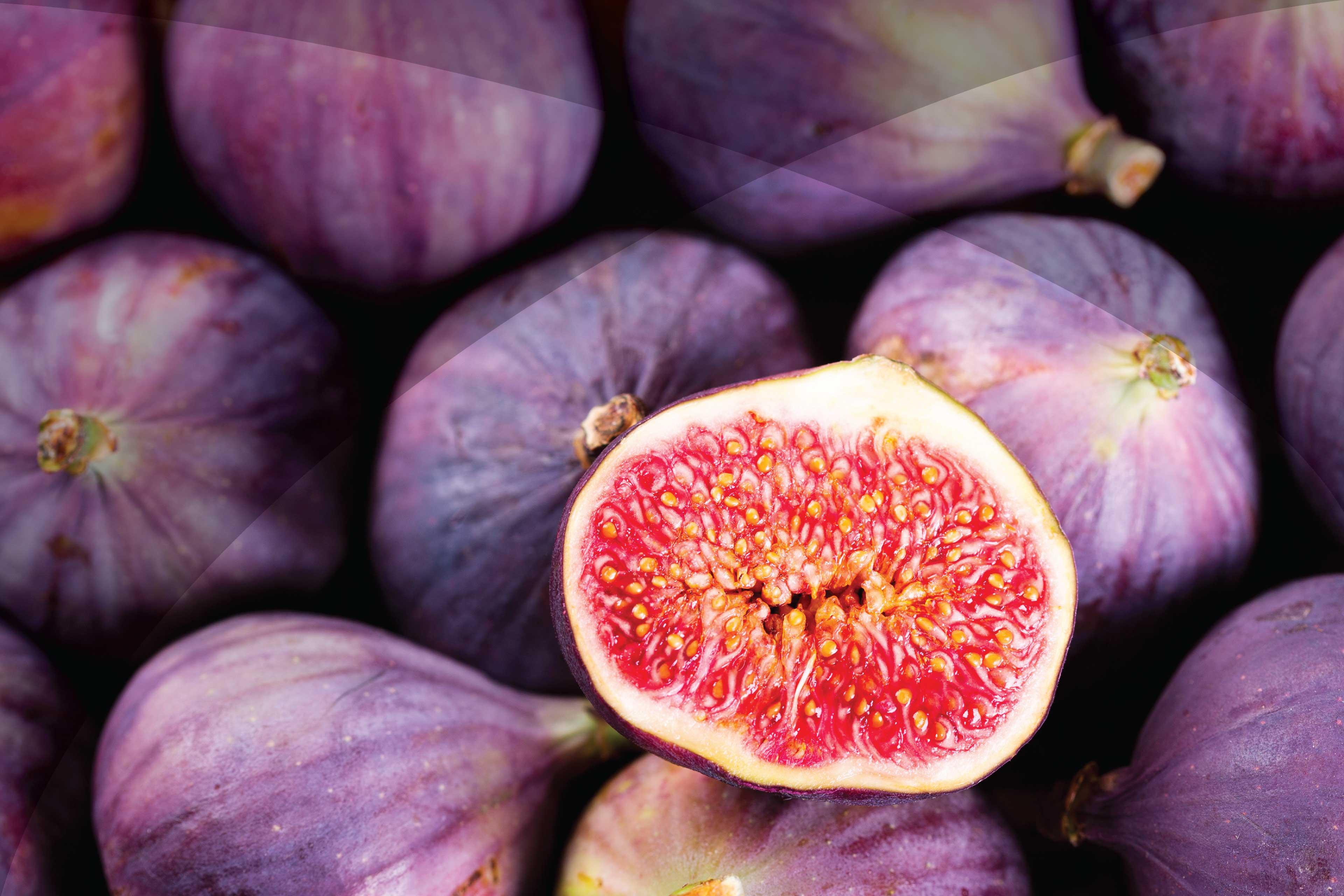 Sa Figs1